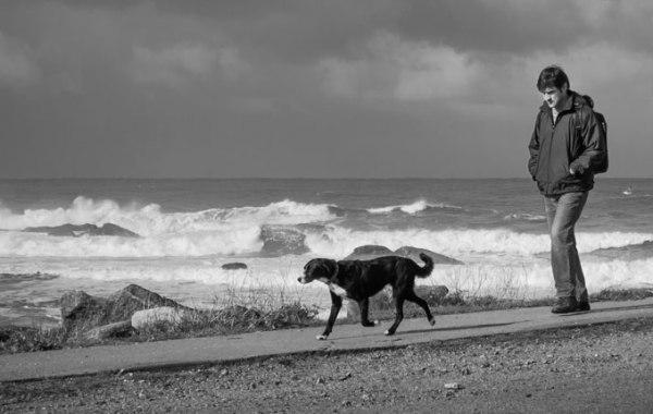 La felicidad de los perros crítica Insertos